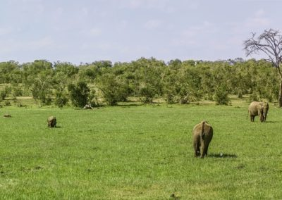Kenya – Au coeur du safari