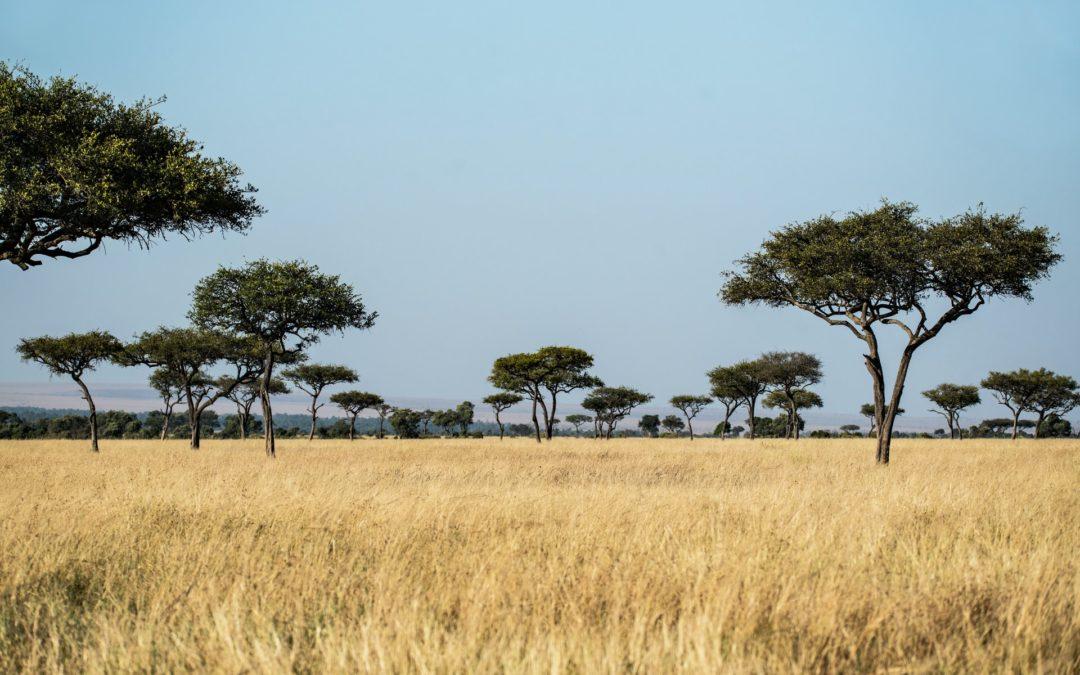 Kenya – Immersion en terres Maasai