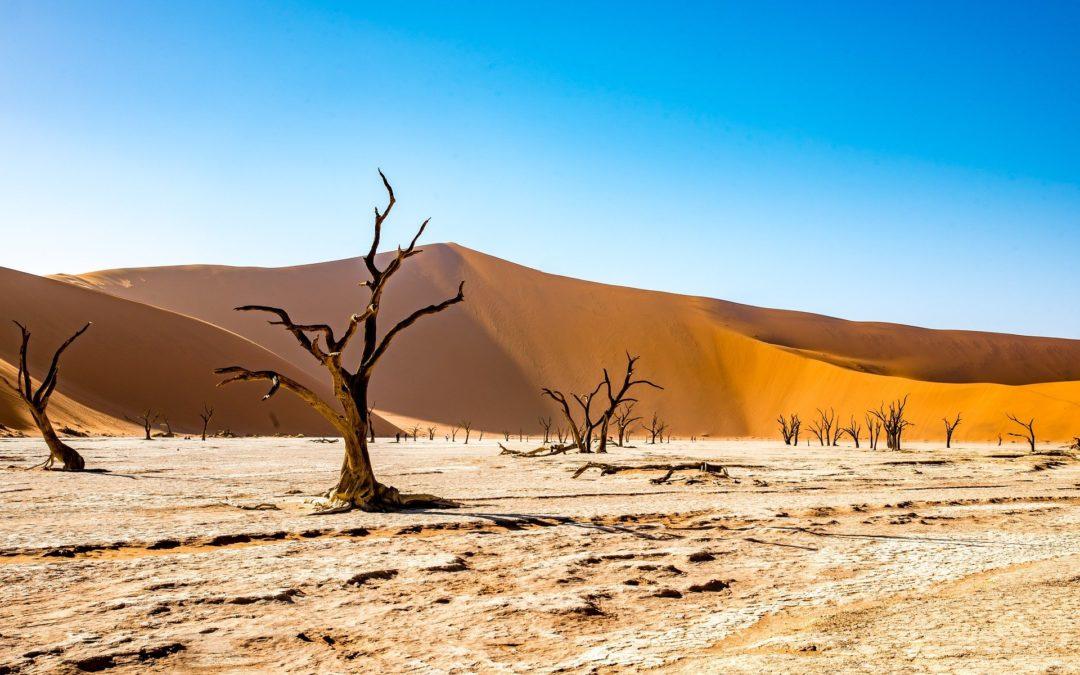 Namibie – Voyage en toute liberté